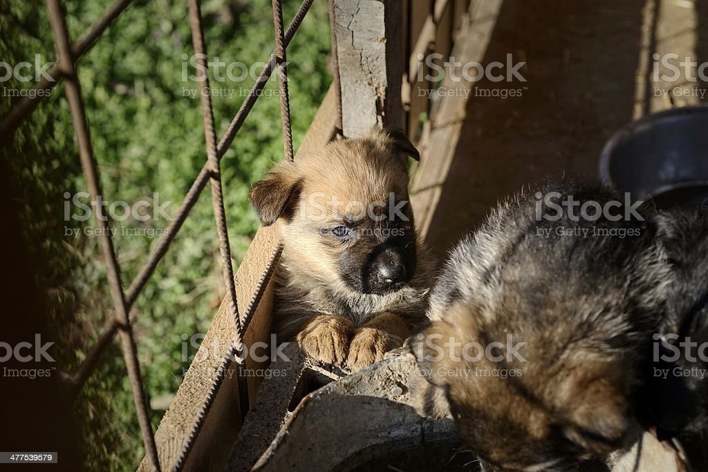 Puppy waiting stock photo