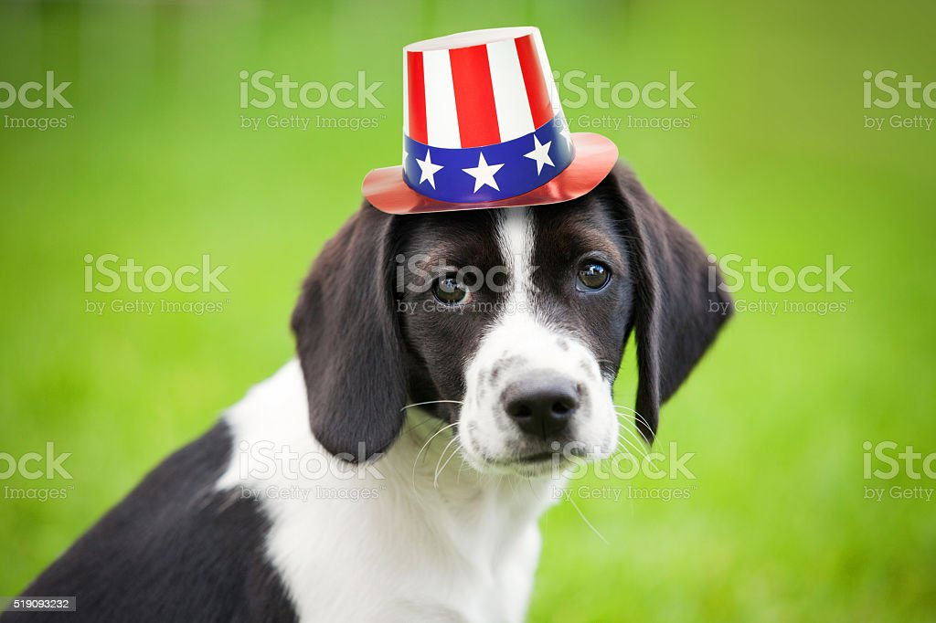 Puppy Wearing Patriotic Hat stock photo