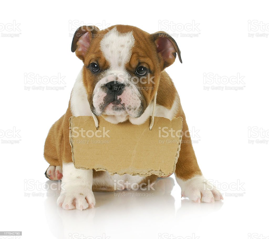 puppy with a message stock photo