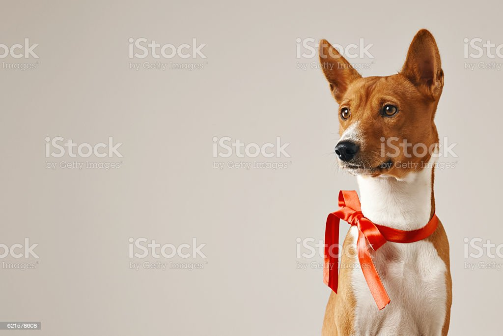 Puppy with a red bow stock photo