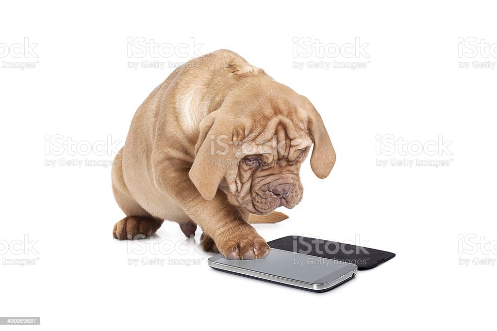 Puppy with cellular phone stock photo