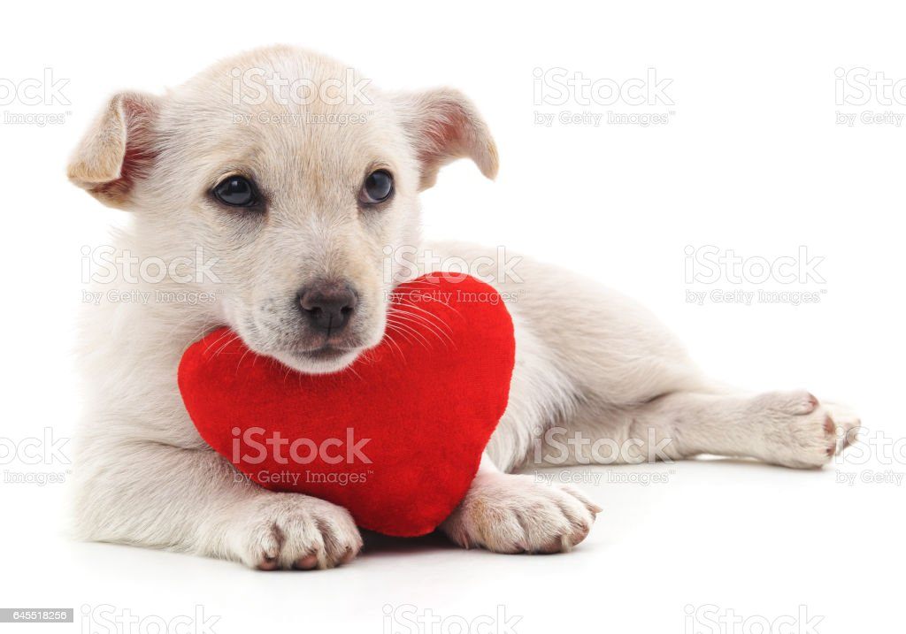 Puppy with heart. stock photo