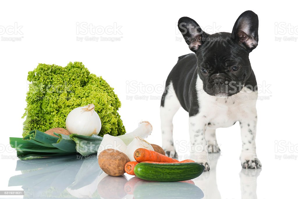 Puppy with vegetables stock photo