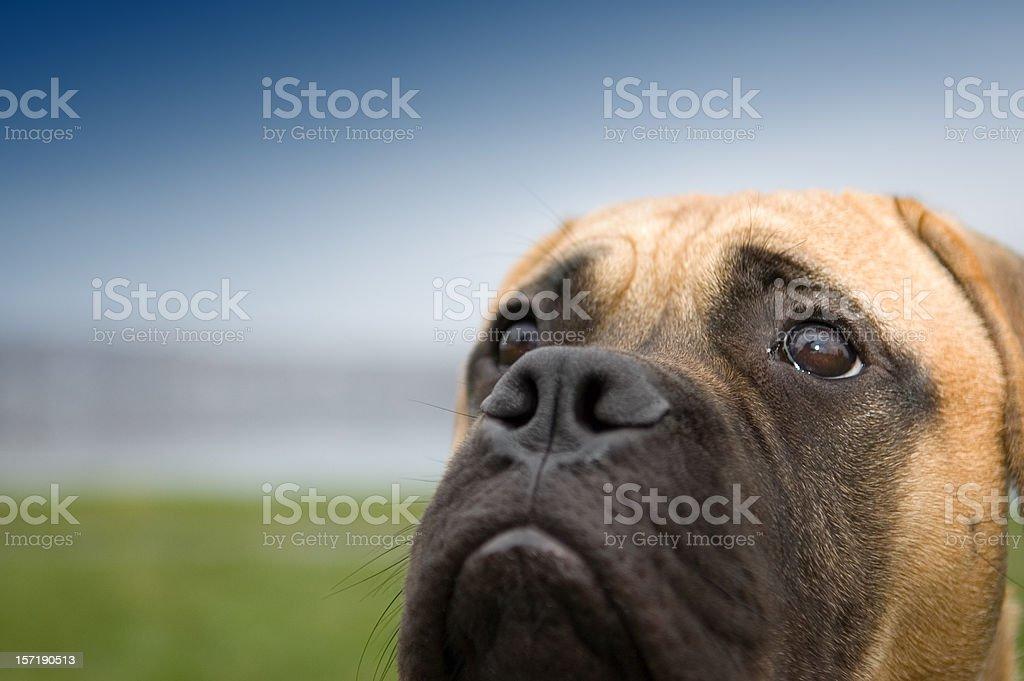 Puppydog Eyes stock photo