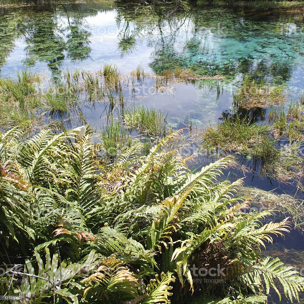Pupu Springs Reflection, Golden Bay, New Zealand royalty-free stock photo