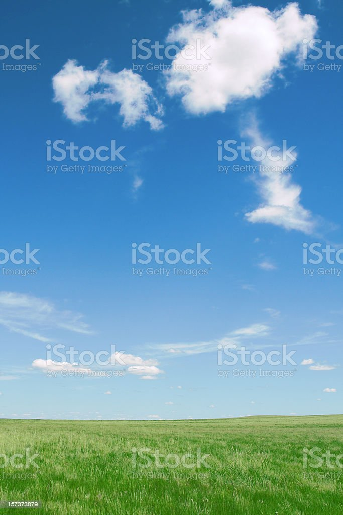 Pure air in grassland stock photo