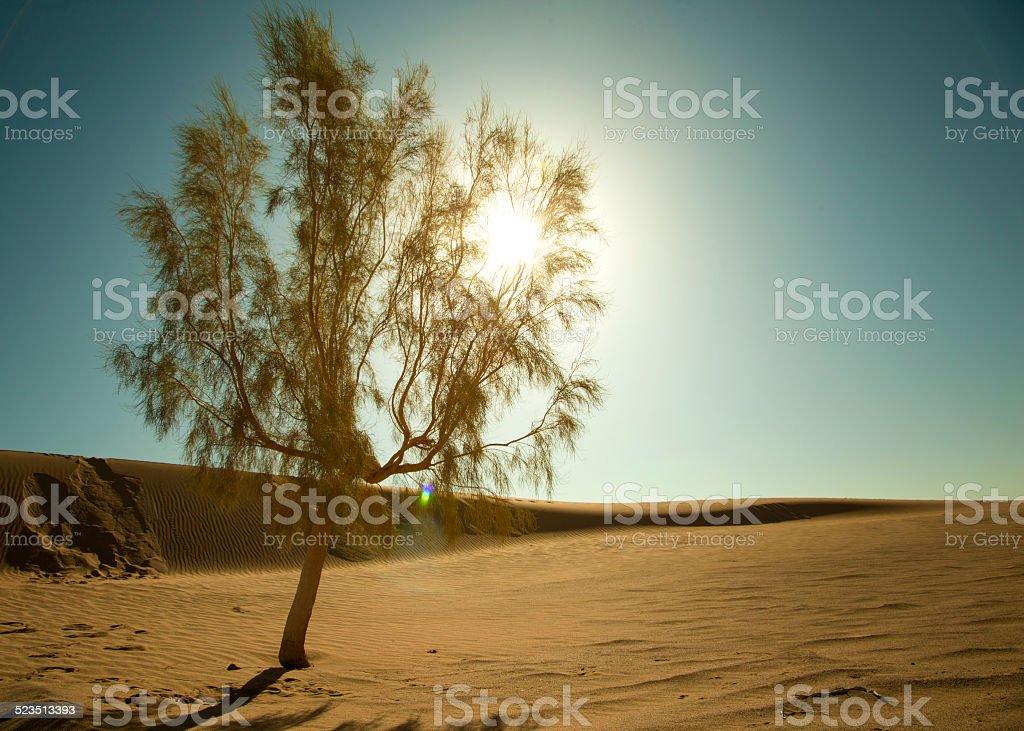 pure désert photo libre de droits