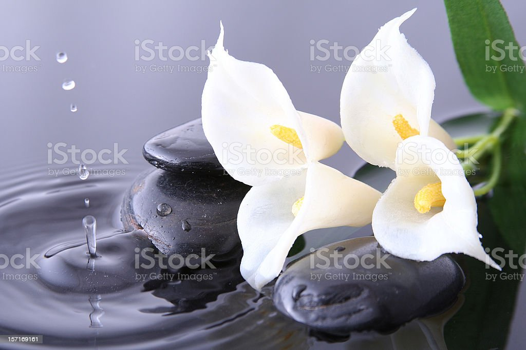 Pure flower and drop royalty-free stock photo