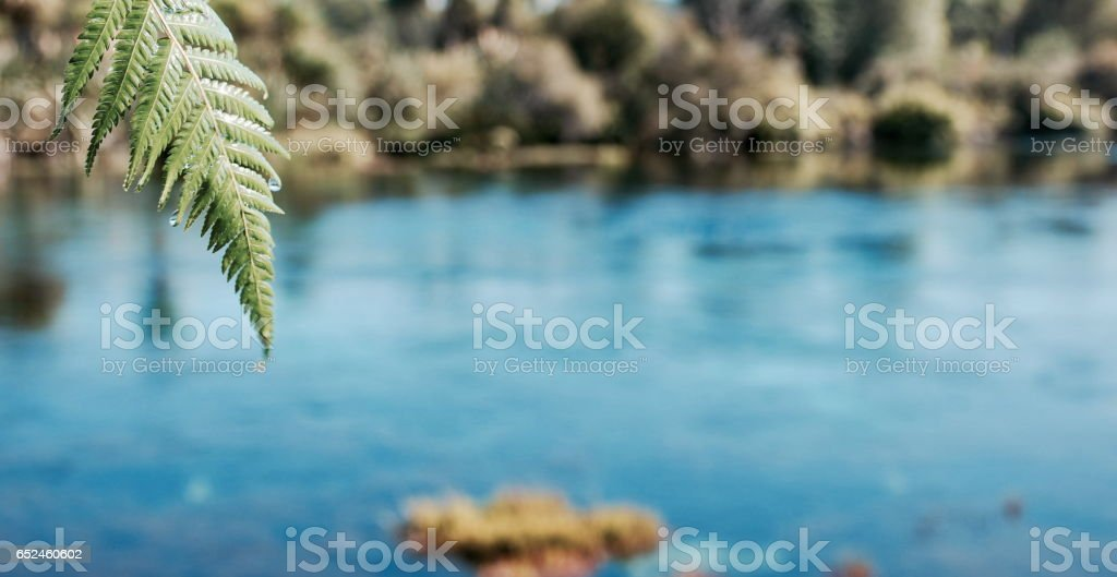Pure Fresh Water Spring stock photo