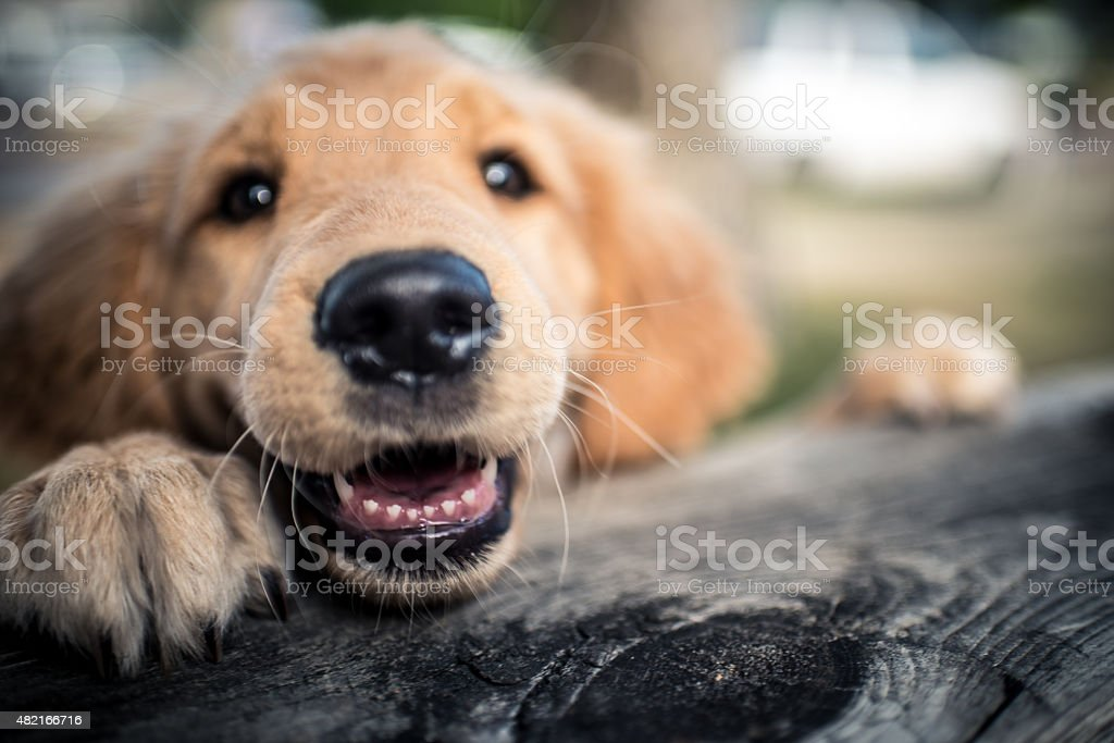 Pure Happiness and Joy stock photo