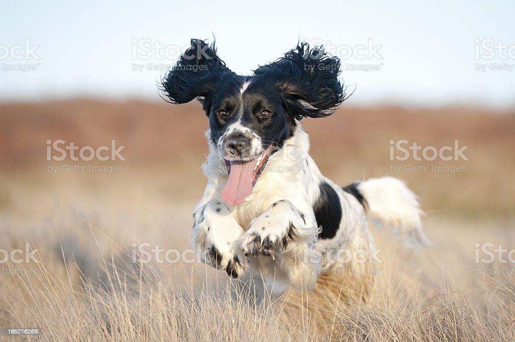 Pure Joy stock photo