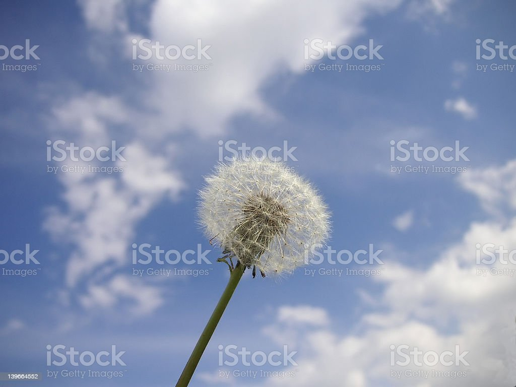 pure nature royalty-free stock photo