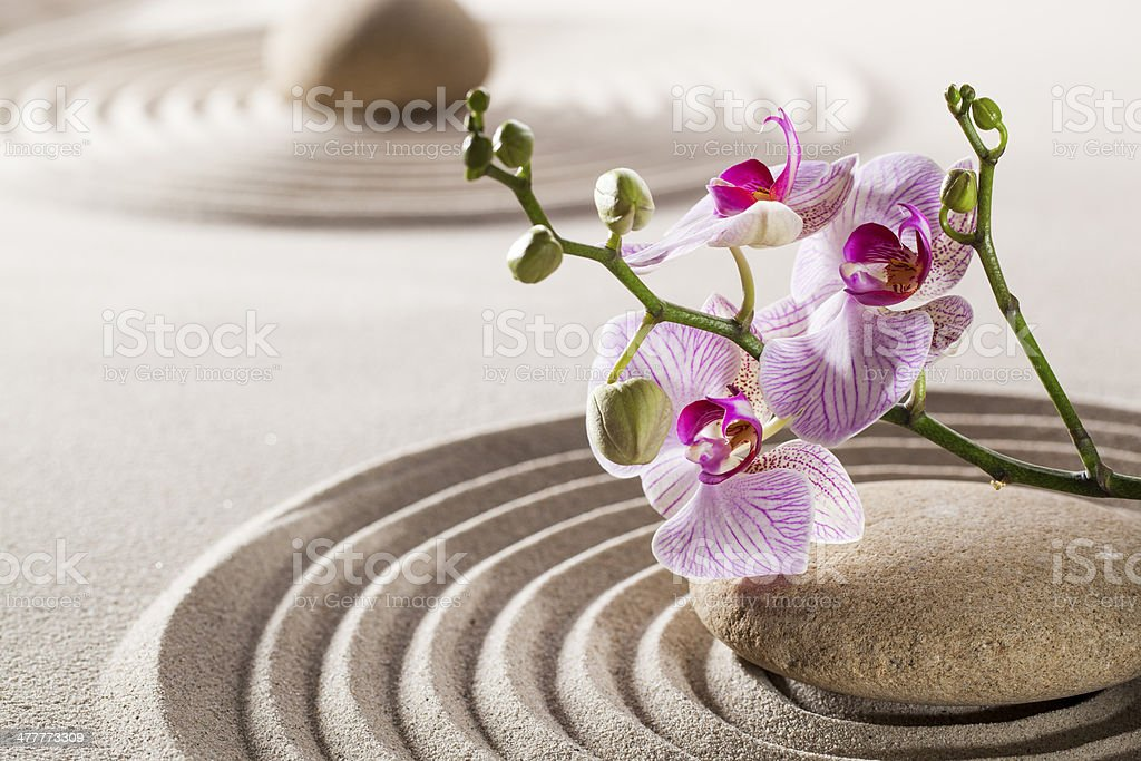 pure wellness with zen orchids royalty-free stock photo