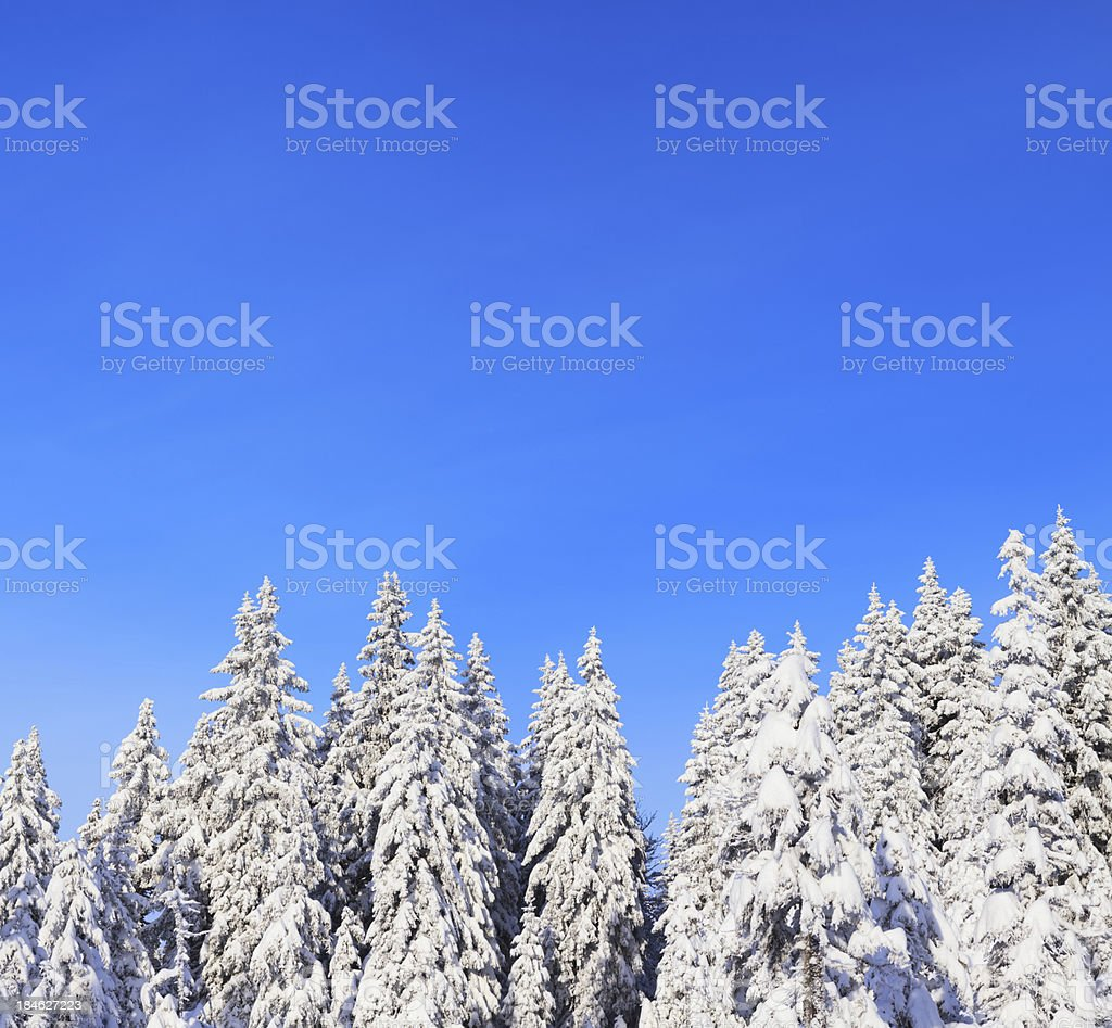 Pure Winter royalty-free stock photo