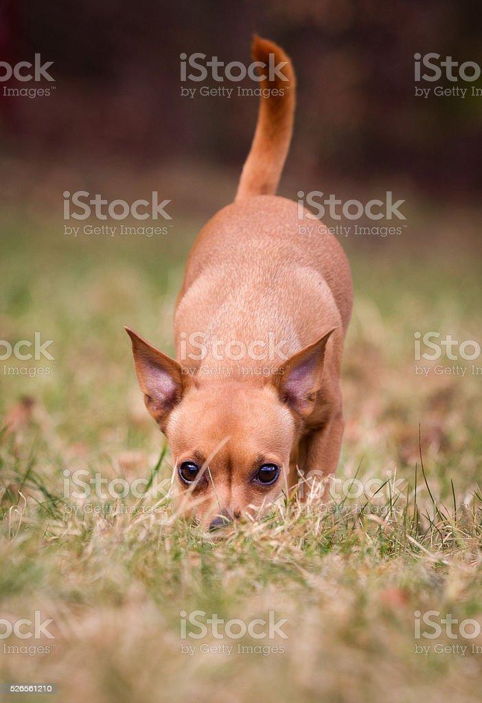 Purebred dog stock photo