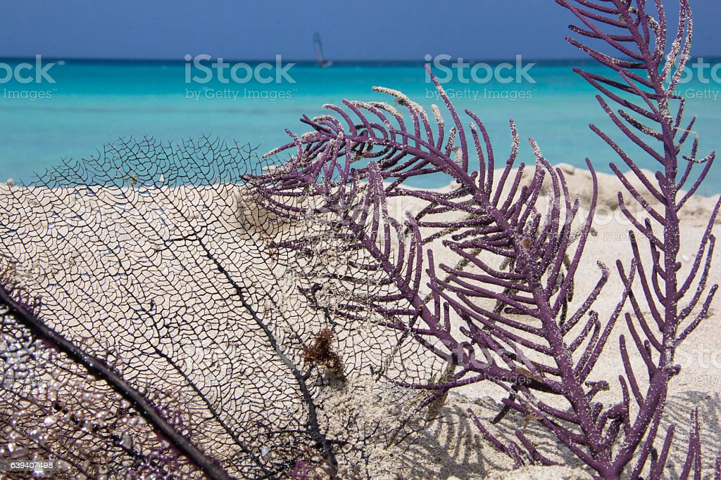 Purple and Black dead  coral in paradisiac Caribbean sandy beach stock photo