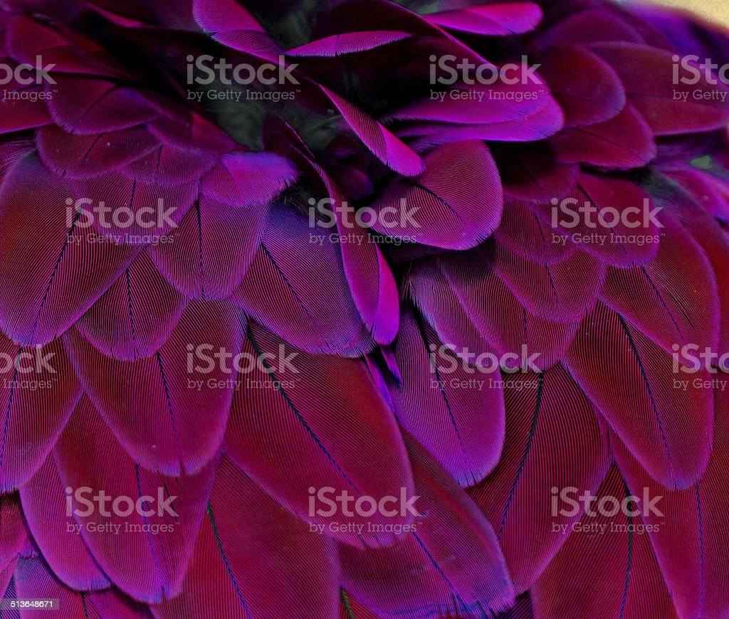 Purple and Pink Feathers stock photo