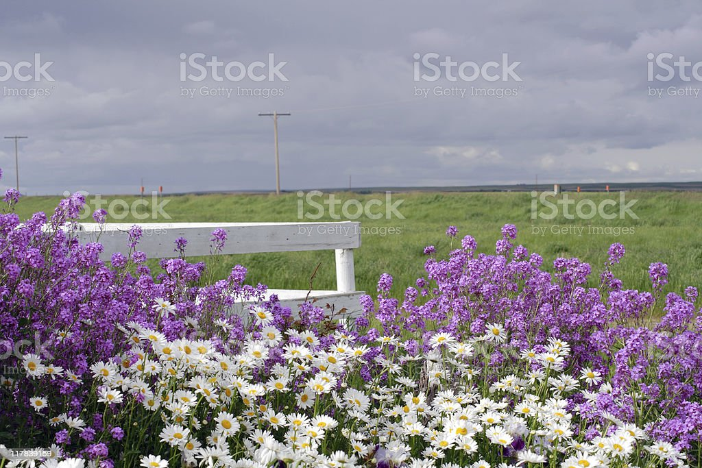 Purple and White Flowers Beneath a Stormy Sky stock photo