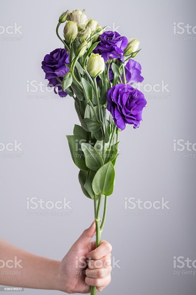 purple and white radix platycodi on grey background stock photo