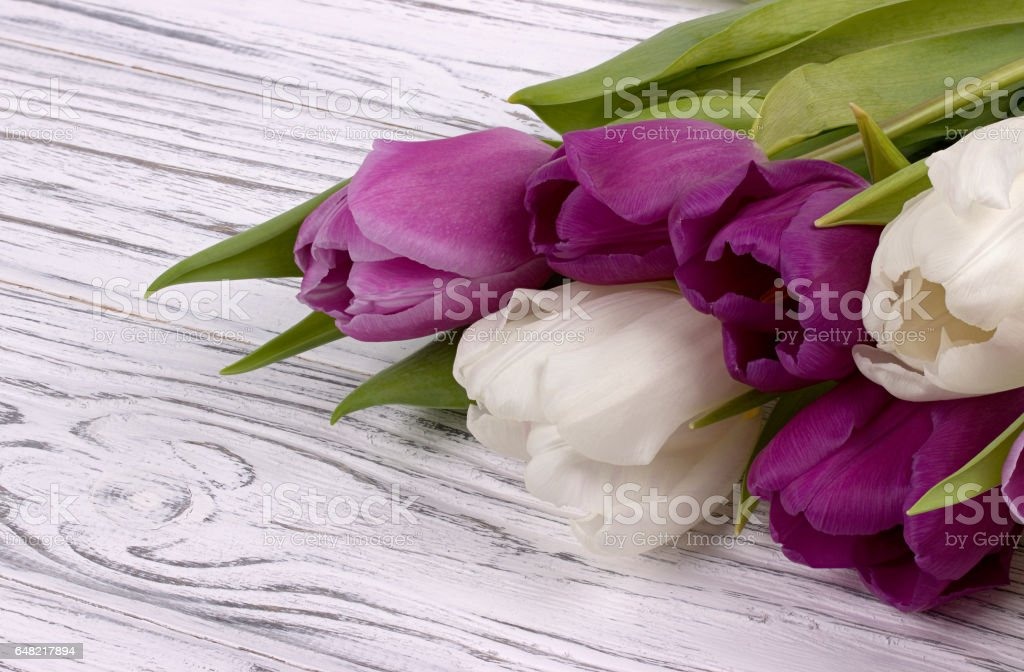 Purple and white tulips on a white wooden background. Womans Day. 8 March. stock photo