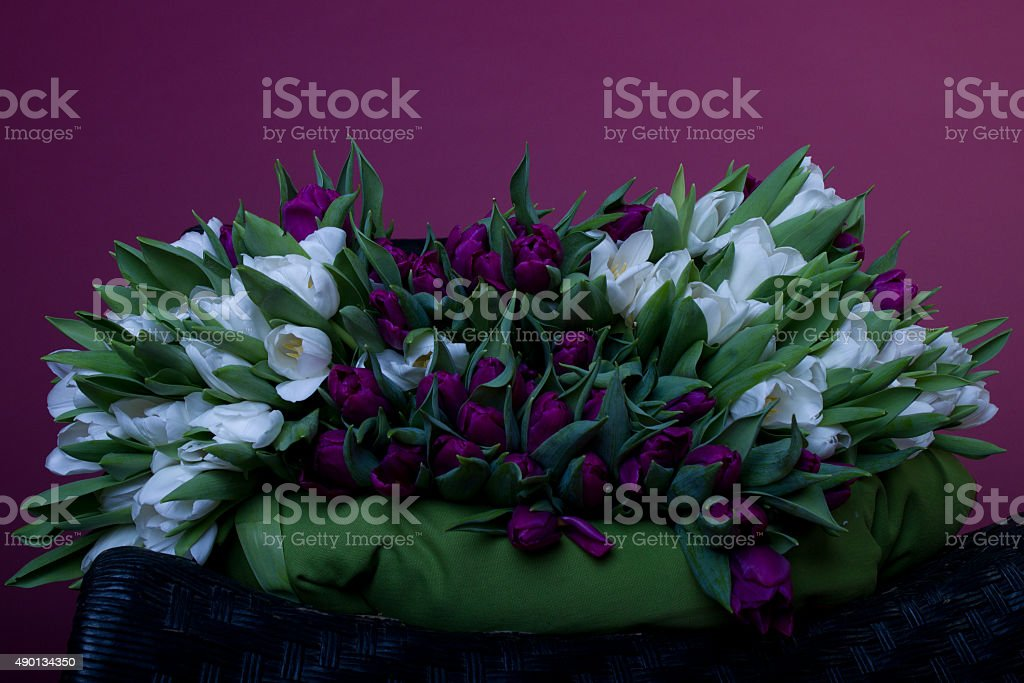 Purple and white tulips on black chair with green cushion royalty-free stock photo