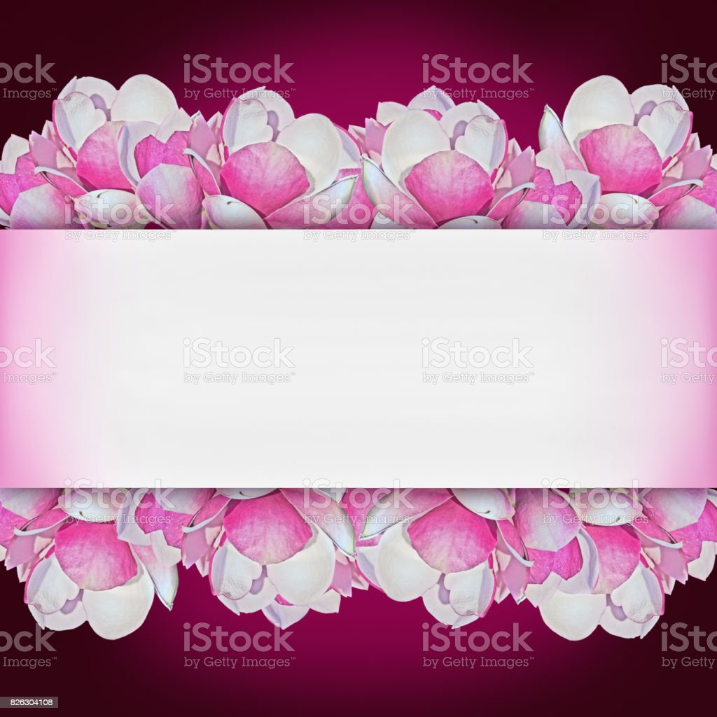 purple background with magnolia flowers stock photo