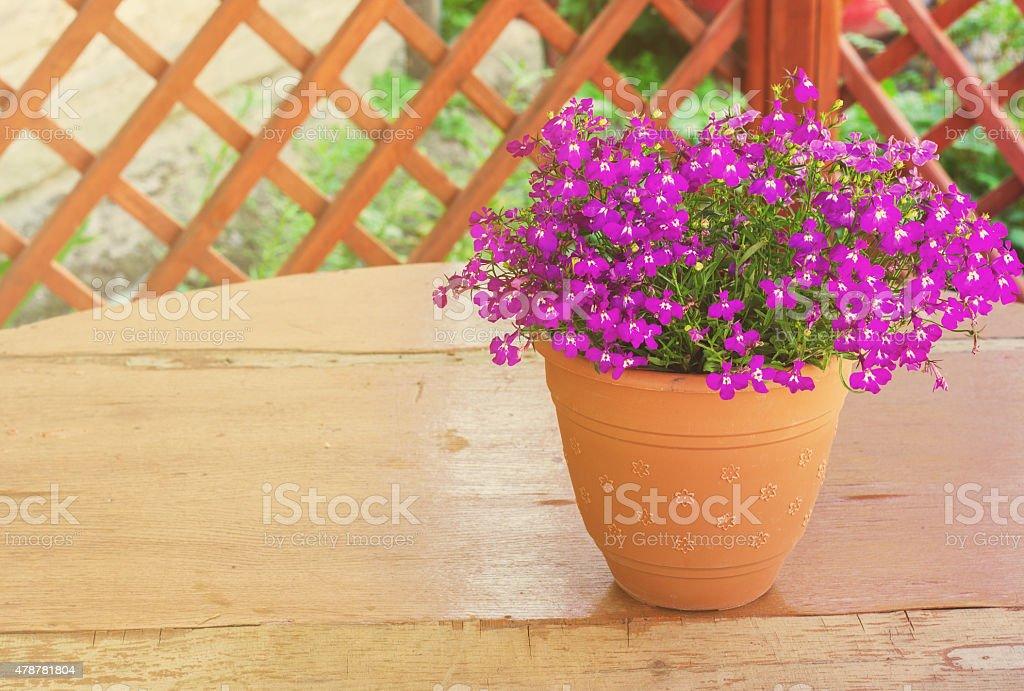 Purple bell flowers in beautiful sunlight stock photo