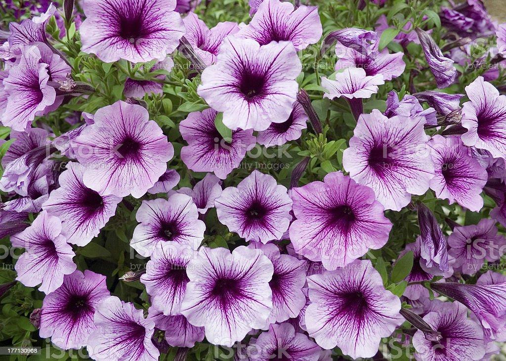 Purple Bouquet stock photo