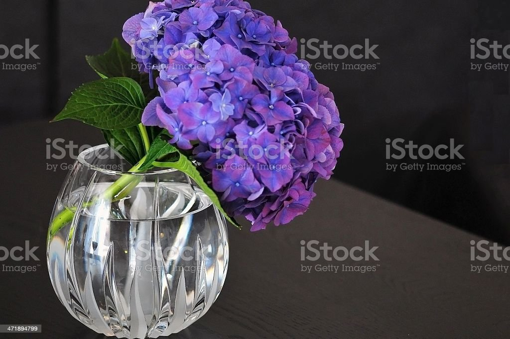 Violet bouquet royalty-free stock photo