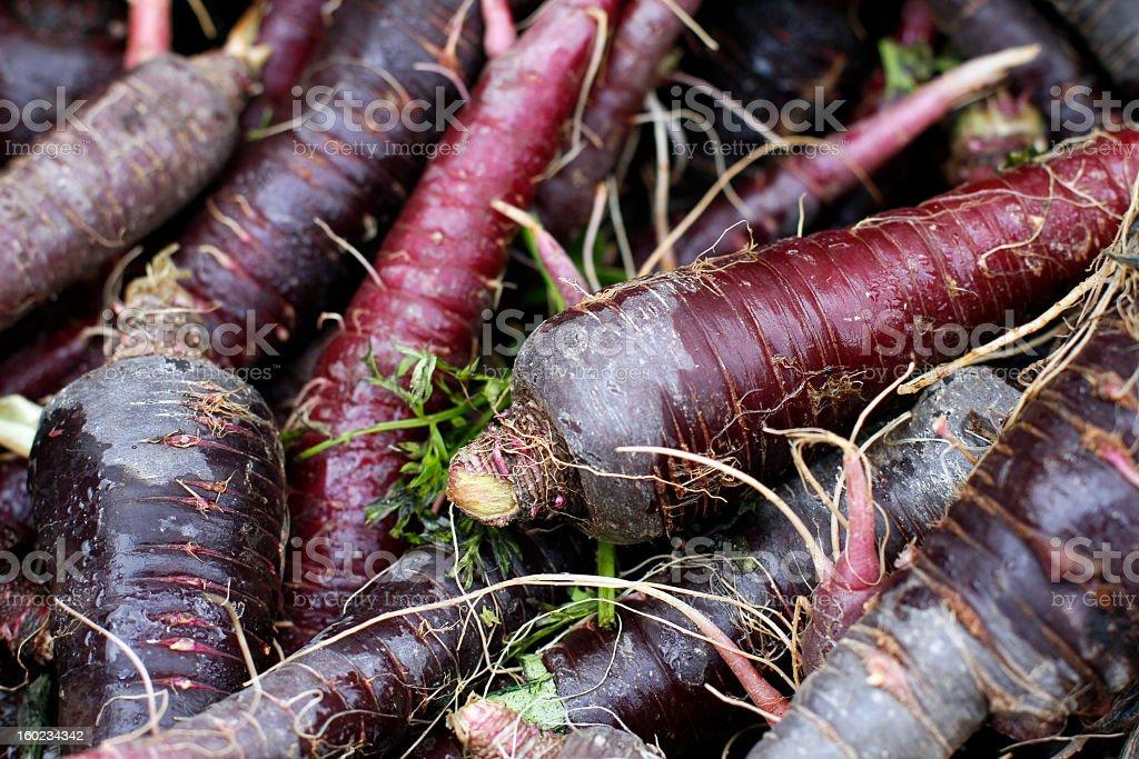 Purple Carrots Close-up stock photo
