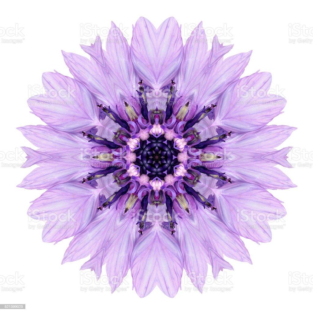 Purple Cornflower Mandala Flower Kaleidoscope Isolated on White stock photo