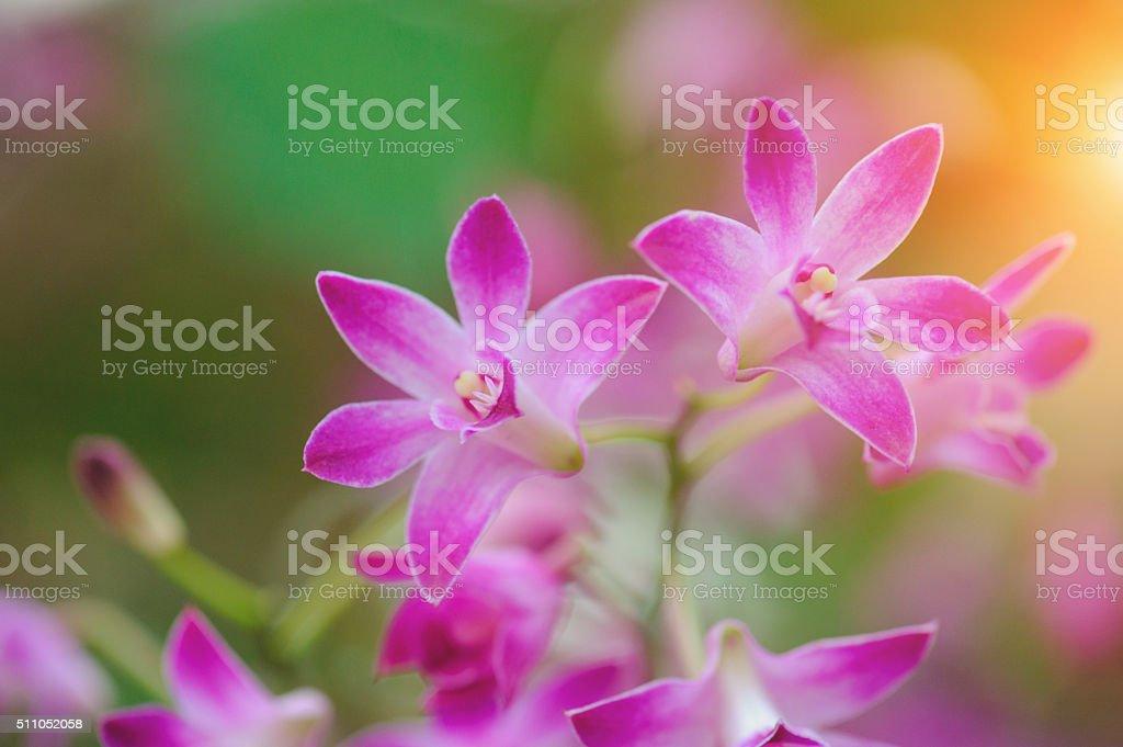 For Silk Flower Cymbidium Orchid