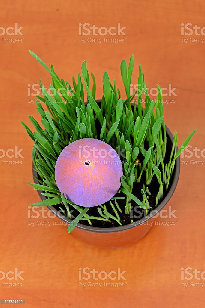 Purple Easter egg in green seedlings on wooden table stock photo
