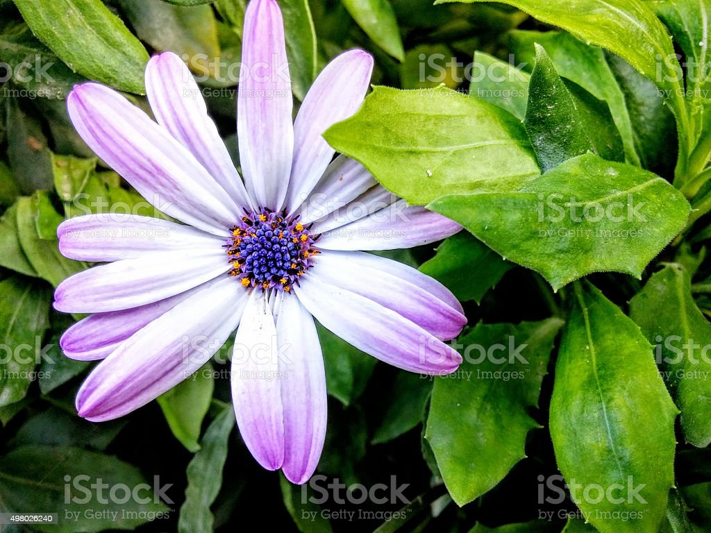 purple flower amazing stock photo