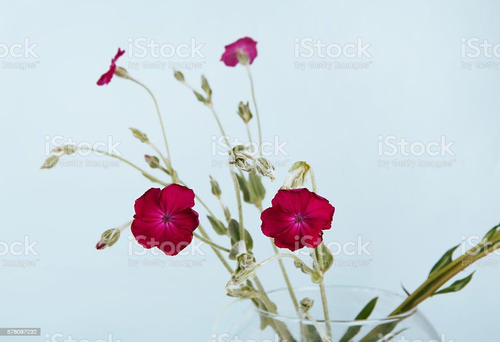 Purple flower bouquet closeup stock photo
