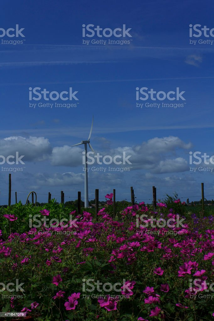Purple flower field royalty-free stock photo
