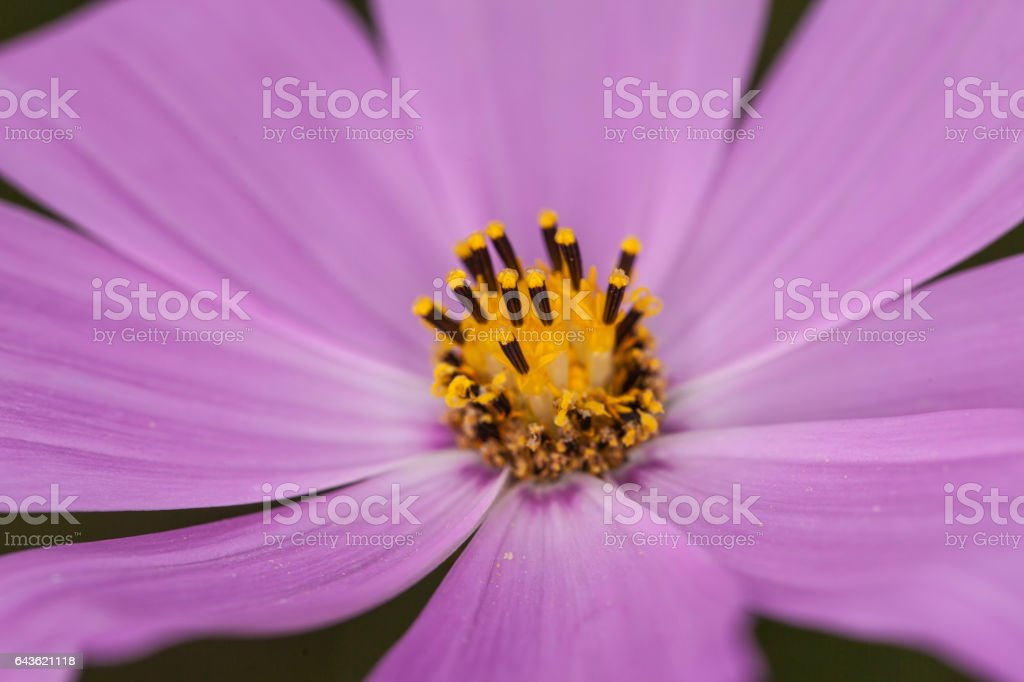purple flower garden close up stock photo