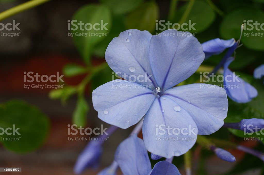 Purple Flower grow with grass stock photo