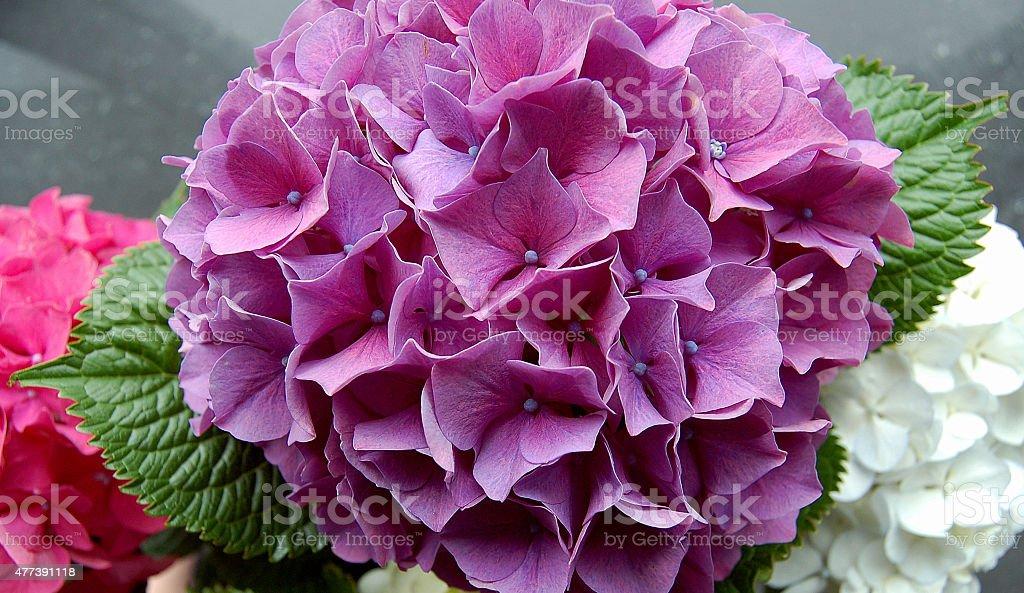 Purple flower zbiór zdjęć royalty-free