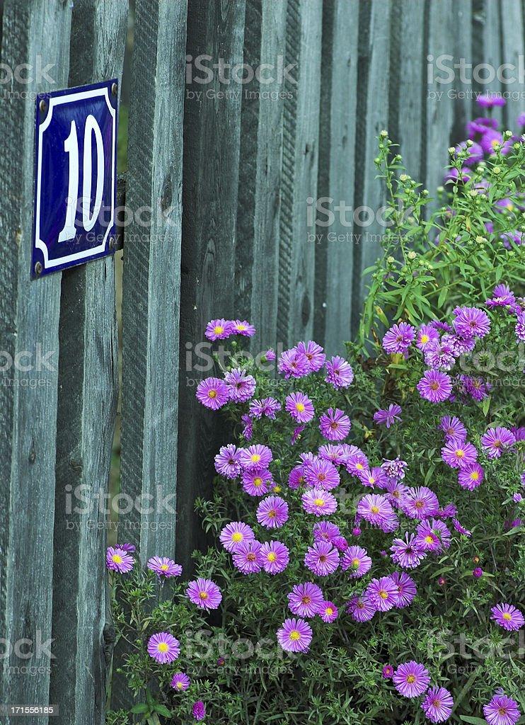 10 Purple Flower str. stock photo