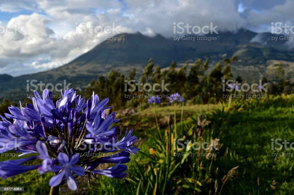 Purple flower with cloud covered volcano and tropical background stock photo