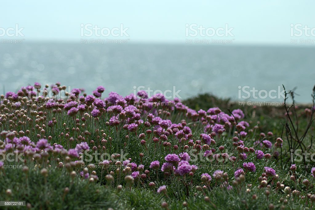Purple Flowers and The Sea stock photo