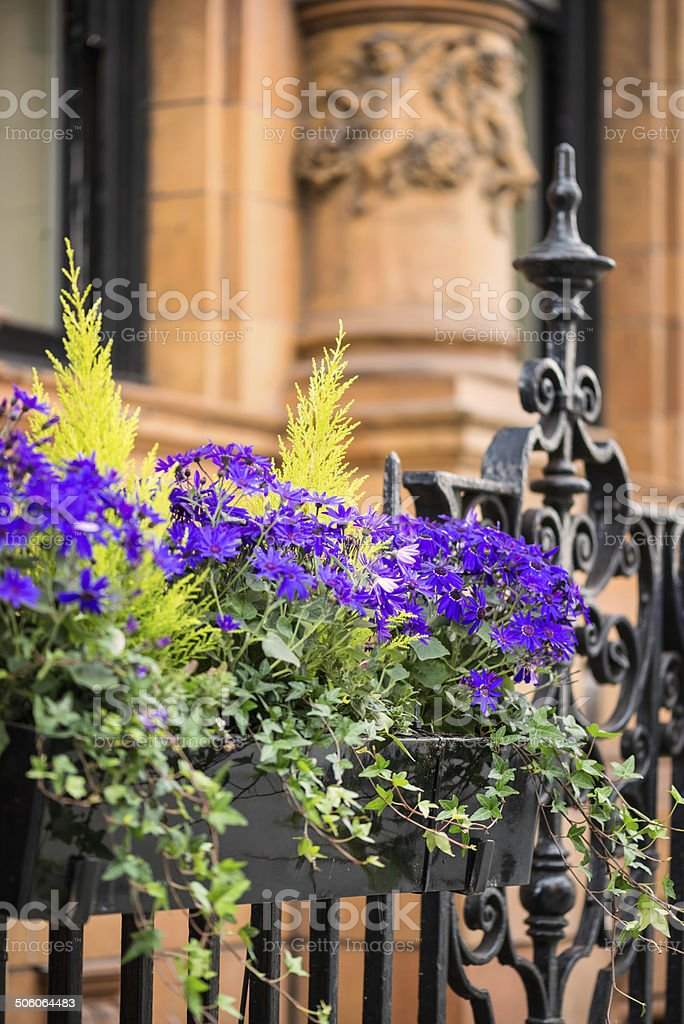 Purple Flowers in Planter Box Outside Office Building royalty-free stock photo