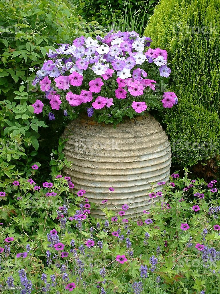 Purple flowers  in the garden royalty-free stock photo