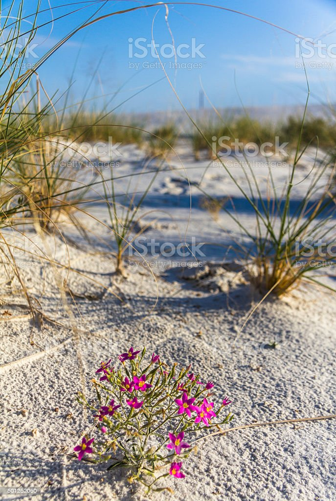 Purple flowers in white sand monument stock photo