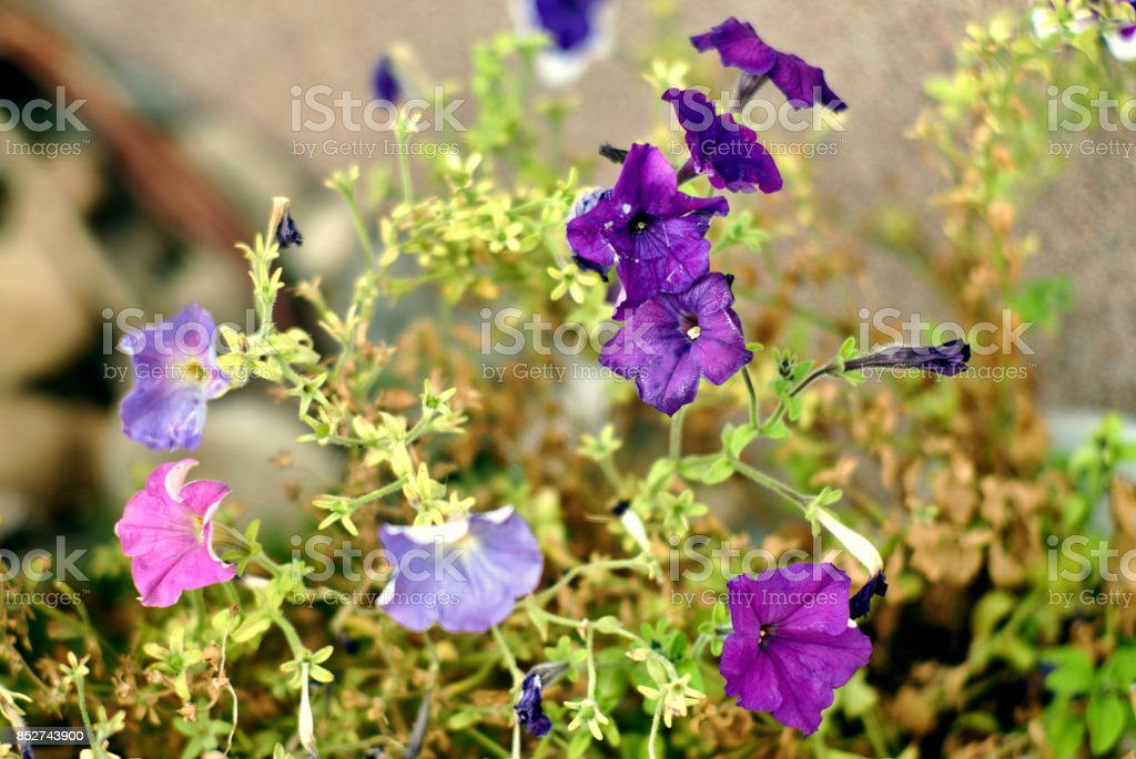Purple flowers on an interesting background stock photo