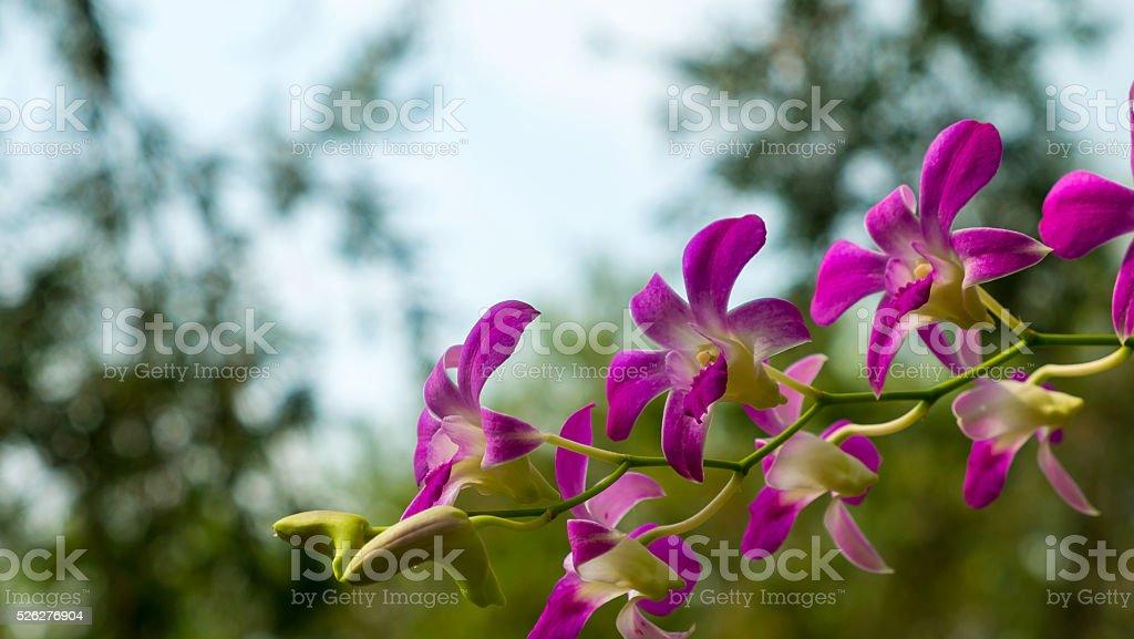 Lila Blumen Orchideen auf Baum Lizenzfreies stock-foto