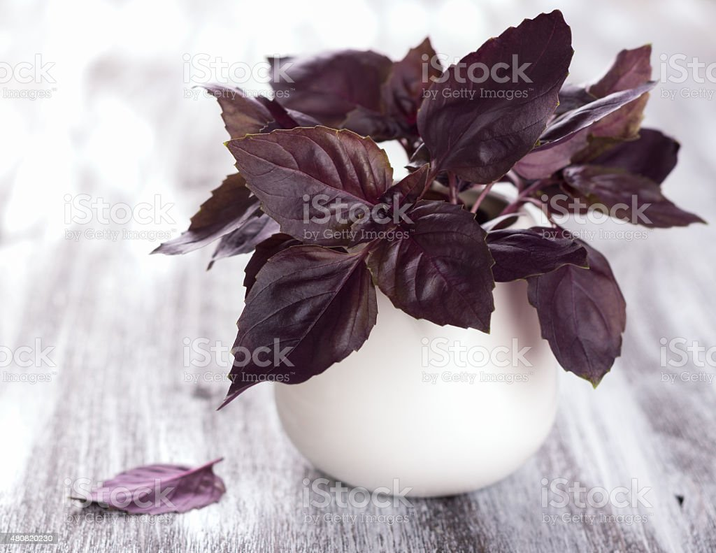 Purple fresh basil on the wooden table stock photo