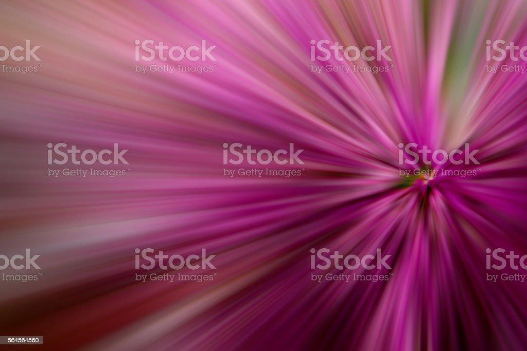 Purple Fusia Burst Light Beam Abstract Background stock photo