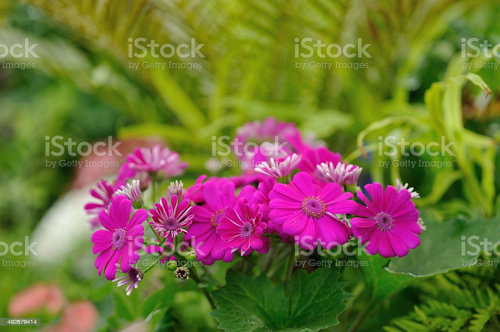 Purple garden flowers stock photo